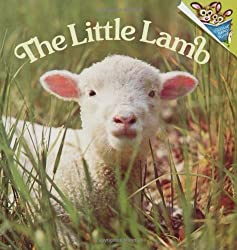 The Little Lamb by Judy Dunn