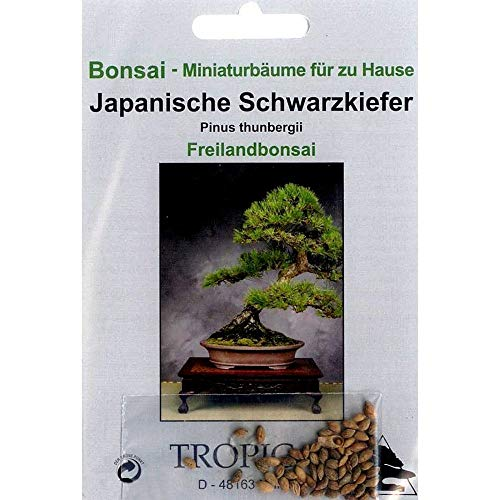 Bonsai - 30 Samen Japanische Schwarzkiefer, Pinus thunbergii, 90000