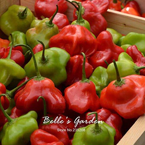 Mad Hatter Pepper 50pcs Graines Capsicum Hot Pepper Graines de légumes jardin Bonsai usine de bricolage # de U65