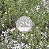 SABOREATE Y CAFE THE FLAVOUR SHOP Infusión Natural a Granel Planta de Tomillo 1 KG