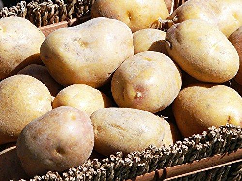 インカのめざめ まとめ買い 10kg (サイズ無選別) 北海道産地直送じゃがいも インカの目覚め ジャガ芋