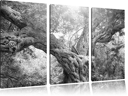 Pixxprint Baum im Wald / 3-Teilig/Gesamtmaß 120cm Leinwandbild bespannt auf Holzrahmen/Wandbild Kunstdruck Dekoration