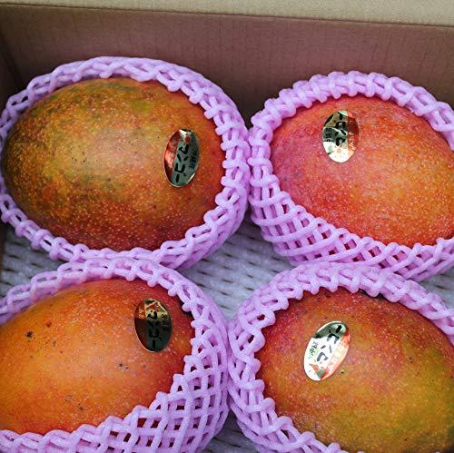沖縄県産フルーツ アップルマンゴーB品(訳あり) 5kg