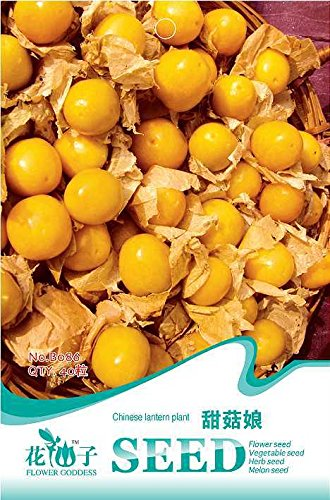 Graines Physalis chinoise Latern végétales 20pcs / sac original d'emballage de fruits & légumes Graines Bonsai Graines