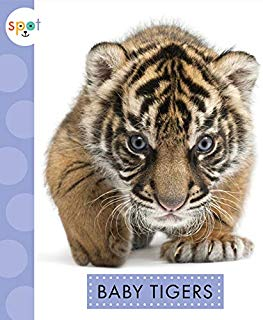 Baby Tigers (Spot)