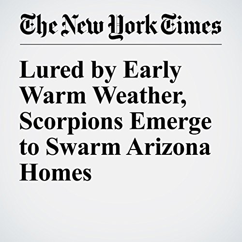 Lured by Early Warm Weather, Scorpions Emerge to Swarm Arizona Homes audiobook cover art