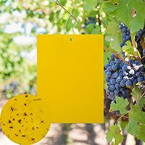 KINBOM Paquete de 20 Trampas de Mosca pegajosas de Doble Cara Amarillas para Insectos de Planta como Mosquitos, pulgones, Moscas Blancas, minadores de Hojas, Otros Insectos de Plantas voladoras