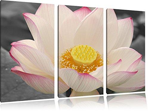 wunderschöne zarte Bachblüte schwarz/weiß 3-Teiler Leinwandbild 120x80 Bild auf Leinwand, XXL riesige Bilder fertig gerahmt mit Keilrahmen, Kunstdruck auf Wandbild mit Rahmen, gänstiger als Gemälde oder Ölbild, kein Poster oder Plakat