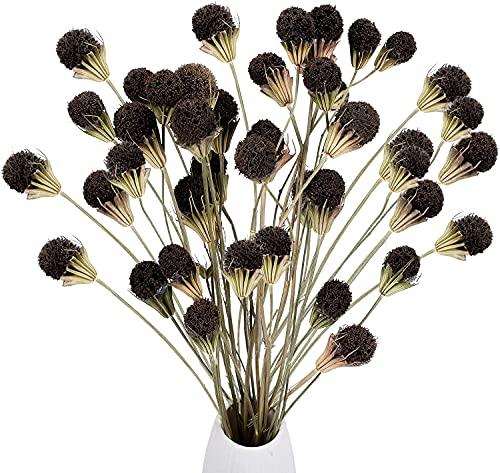 XHXSTORE 40PCS Ramo de Flores Secas Craspedia Flores Secas Naturales Marrón para Florero Ramo DIY Arreglo Floral Mesa Decorativa Boda en Casa