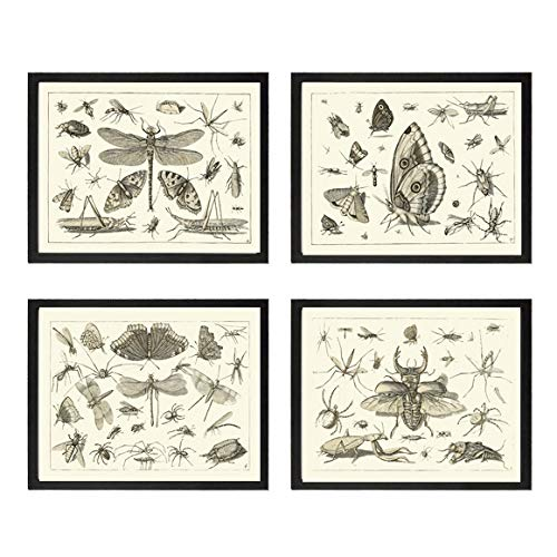 Art Print SET of Cheap sale 4 Antique Beautiful Dragonfly Cheap mail order sales Butterfly Beetle