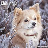 Chihuahua 2022- 16-Monatskalender: Original Avonside-Kalender [Mehrsprachig] [Kalender]: Original BrownTrout-Kalender [Mehrsprachig] [Kalender] (Wall-Kalender)