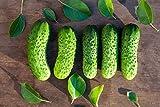 Boston Pickling Cucumber Seeds - Non-GMO - 3 Grams