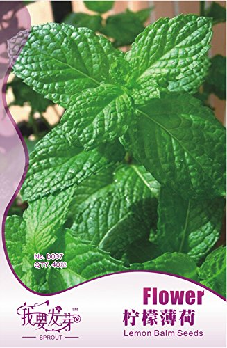 1 Original Pack, 40 graines / paquet, Fresh Lemon Mint Herbes Balm Heirloom Seeds # NF141