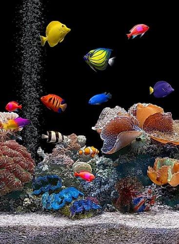 Rectangle Refrigerator Magnet - Saltwater Aquarium Colorful Fish Tank