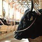 ブランド和牛1頭買いギフト 肉贈