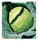 Graines de chou de Copenhague - Brassica oleracea - semences agricoles - chou-fleur - CP002 - environ 3300 graines
