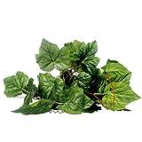 ペット用品 爬虫類テラリウム装飾 グレープヴァインの葉の飾り物 生息地の装飾造園 人工つる 植物の籐飾り (ブドウの葉)