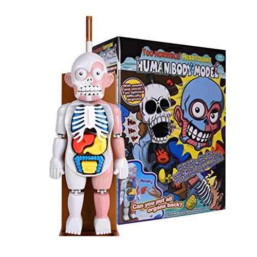Children's Toy Human Body Model 3D Human Organ Anatomical Puzzle Assembly Model, Human Anatomy Body Organ Model for Teaching Education School, Jigsaw Toy for Children Kids Desktop Decoration