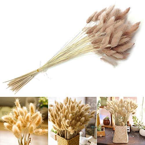 Alivier 100 Stück natürliche getrocknete Blumen Bouquet natürliches Dogtail Gras für Hausgarten Party Dekor Blumenarrangement