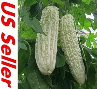 RARE White Bitter Melon/Bitter Gourd Seeds E22, Beauty Winner 10 Seeds