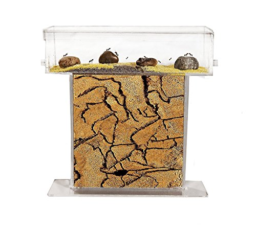 AntHouse - Hormiguero Natural de Arena - Kit T Acrílico 15x15x1,5 cm (Hormigas Gratis)