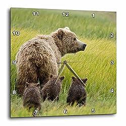 3dRose DPP_87351_1 Alaska, Lake Clark NP, Grizzly Bear - US02 BJA0125 - Jaynes Gallery - Wall Clock, 10 by 10-Inch