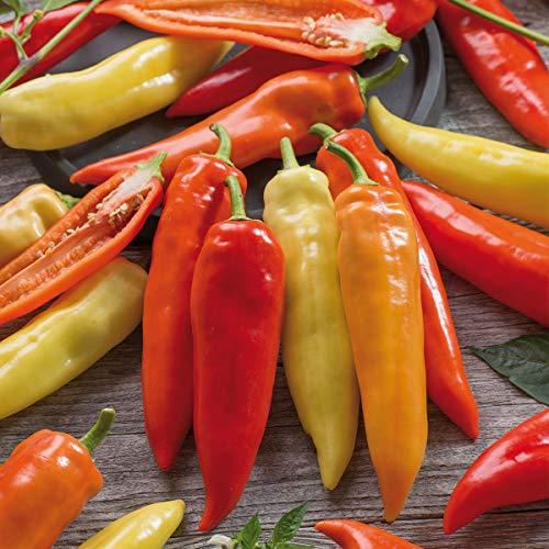Kiepenkerl Paprika 'Pinokkio', F1 | süß | milder Geschmack | 1 Packung Samen