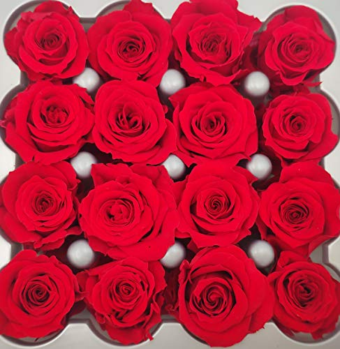16 Mini Cabezas Rosas Preservadas (eternas) Composiciones florales, centros de mesa, arreglo floral