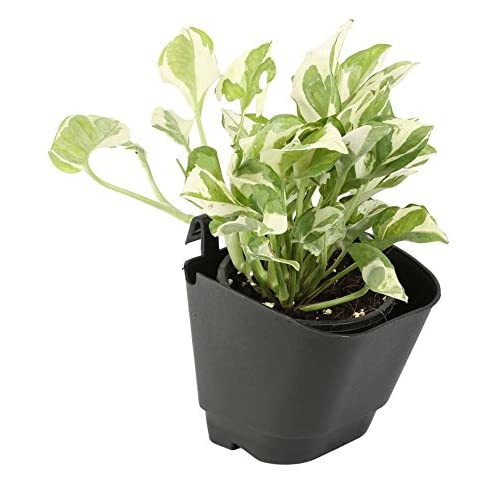 Cappl Vertical Garden Wall Hanging Pot (Pack of 12,Black)