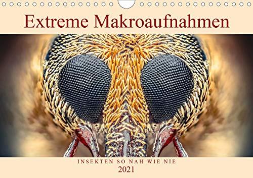 Extreme Makroaufnahmen - Insekten so nah wie nie (Wandkalender 2021 DIN A4 quer)