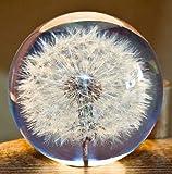 Pisapapeles de diente de león, una bola de ensueño. Bola de deseos de cristal. Pisapapeles de diente de león. El regalo perfecto (9 cm de diámetro)