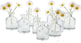 Chive - Loft, Set of 10 Clear Short Bottle 2