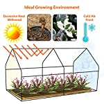 "Tooca 71"" x35"" x35"" portable greenhouse for indoor outdoor gardens/patios/backyards, suitable young plants (not included garden bed) 9 【perfect plant protection】clear pvc cover can stop plant seeds or young plants from frost, and keep internal moisture. It's ideal for maintaining seeds' breeding and plants' growing, helping extend the growing season for all year around. 【2 roll-up zippered doors】the mini greenhouse has two doors, which makes it easy and convenient for watering and ventilation. 【steady & reliable】iron frame with spray paint rust prevention treatment is sturdy and durable."
