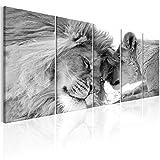 murando Cuadro en Lienzo León 200x80 cm Impresión de 5 Piezas Material Tejido no Tejido Impresión Artística Imagen Gráfica Decoracion de Pared Naturaleza Animal Paisaje g-B-0061-b-p