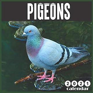 Pigeon 2021 Calendar: 16 Months calendar 2021, Cute Birds Calendar 2021