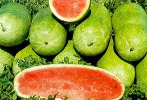 Charleston Gray (Rot) Wassermelone Erbstück Non-GMO Melon Fruit Garden Seeds