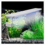 yywl Luces para acuarios Tanque de Pescado Extensible LED LED Aquarium Iluminación Clip-en Barra rígida Lámpara de iluminación ACURÁTICA Lámpara LED de Agua Dulce para Acuario (Color : 38CM)