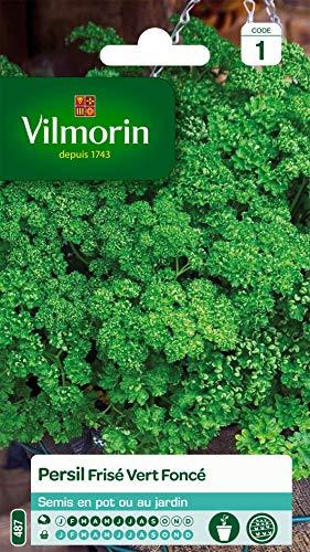Vilmorin - Persil frisé vert foncé - Aromatique incontournable- culture en pot ou jardin - apports nutritifs intéressants -culture facile - rendement jusqu'à 2x2m