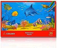 【Colleen】コーリン鉛筆 Watercolour Pencil 六角 36色 紙箱入り水彩 色鉛筆 CAP-936 [並行輸入品]