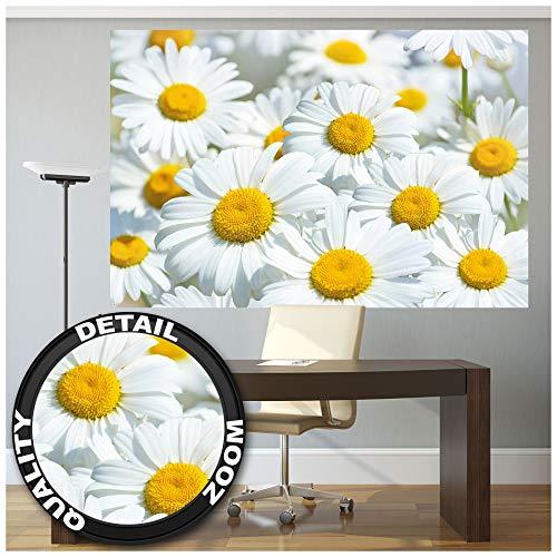 Great Art madeliefjes – muurschildering decoratie weide bloemen natuur landschap bloemenbehang bloemenbehang bloemenbehang planten I afbeelding wallpaper fotobehang wandbehang poster wanddecoratie