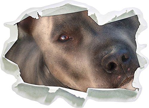 Stil.Zeit schöner Pit Bull Terrier, Papier 3D-Wandsticker Format: 92x67 cm Wanddekoration 3D-Wandaufkleber Wandtattoo