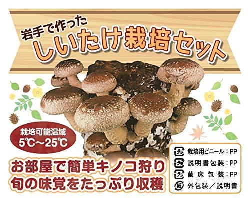 【産地直送】【2個】お部屋で簡単キノコ狩り しいたけ栽培セット(キット容器不要)