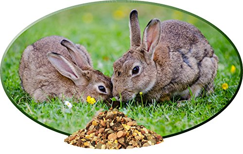 Kaninchen Futter, Kaninchennahrung ohne Pellets mit Erdnüssen, Sonnenblumenkernen, Kardi, Möhrenflocken, Erbsenflocken, Maisflocken – leckere bunte Kaninchenfuttermischung, Alleinfutter für Kaninchen, Rundum-Sorglos Futtermischung Tomodachi Mümmelmanns Melange 1kg Eimer - 7