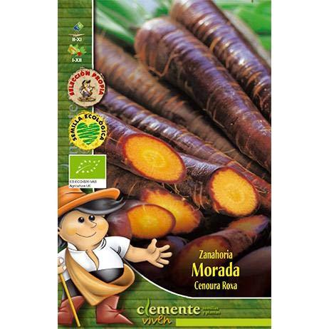 Semillas ecológicas de Zanahoria Morada