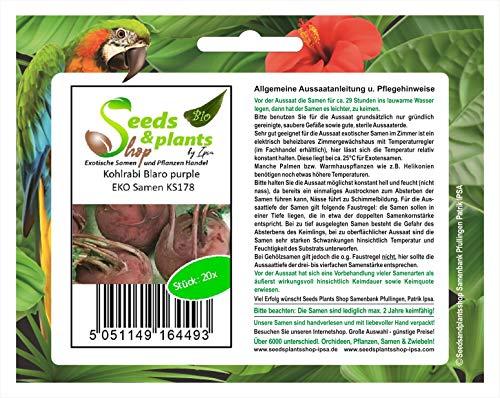 Stk - 20x Kohlrabi Blaro purple EKO - Samen Gemüse Garten Pflanze Saatgut KS178 - Seeds Plants Shop Samenbank Pfullingen Patrik Ipsa