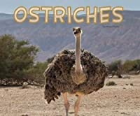 Ostriches (Meet Desert Animals)