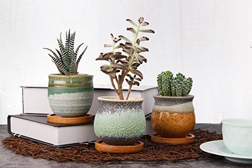 T4U Planta Maceta de Suculento con Bandeja de bambú Pancromático Cerámico Paquete de 3, Cactus Maceteros de Ventana…