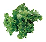 Burpee Green Salad...image