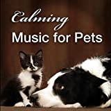 Pet Care: Calming Acoustic Guitar Song for Veterinarians & Animal Hospitals