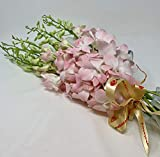 eflowerwholesale Peachy Dendrobium Orchids